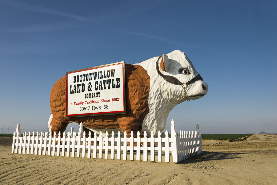 Giant steer in Buttonwillow, CA